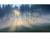 Forest, Fog, Sunbeams