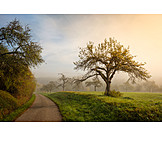 Dirt, Morning light, Streuobst meadow