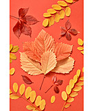 Autumn leaf, Various