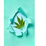 Marijuana Plant, Alternative Medicine