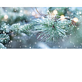 Winter, Fir Branch, Snowflakes