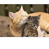 Cat, Cleaning, Kitten