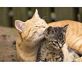 Katze, Putzen, Katzenjunges