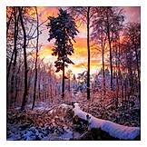 Dusk, Forest, Winter
