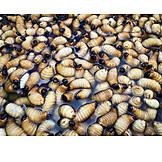 Food, Larva