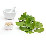 Heilpflanze, Ginkgoblatt, Naturheilkunde
