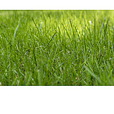 Meadow, Grass, Blade Of Grass