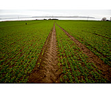 Feld, Acker, Landwirtschaft