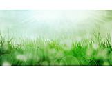 Meadow, Sunbeams, Spring