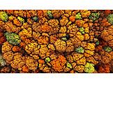Autumn, Trees, Autumn Colors