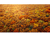 Forest, Autumn Forest, Deciduous Forest