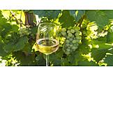 Wine, White Wine, Wine Sites