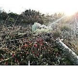 Forest, Deadwood, Cladonia Rangiferina