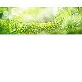 Backgrounds, Meadow, Moss, Spring