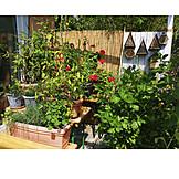 Garten, Balkon, Topfpflanzen, Terrasse, Blumentöpfe