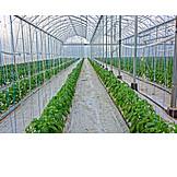 Greenhouse, Foil tunnel