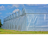 Agriculture, Gardening, Greenhouse