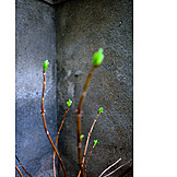 Zweig, Frühling, Urban, Knospe, Aufblühen
