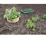 Garten, Gartenarbeit, Gartenkräuter, Küchenkräuter, Kräutergarten
