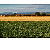 Village, Agriculture, Rural Scene, Grainfield