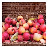 Apple, Apple Harvest