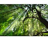 Baum, Sonnenstrahlen, Frühling