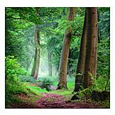 Forest, Path, Deciduous Forest