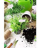 Gardening, Planting, Herb garden