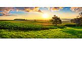 Sunset, Field