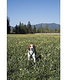 Dog, Dandelion Meadow