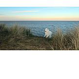 Sea, Dog