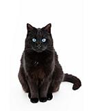 Katze, Schwarze Katze