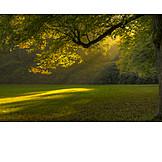 Sunlight, Meadow, Park