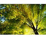 Sunbeams, Vivid, Tree