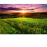 Sunset, Horizon, Field, Hill
