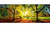 Sunlight, Park, Tree