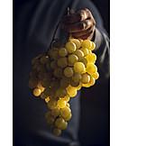 Grape, Harvest