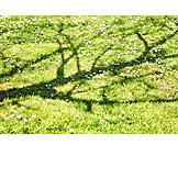 Meadow, Tree Shadow