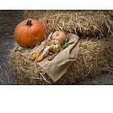 Autumn, Vegetable, Thanksgiving, Harvest