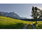 Footpath, Meadow, Imperial Mountains