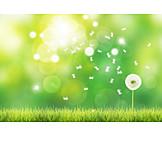 Meadow, Dandelion, Umbrella
