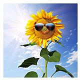 Summer, Sunflower, Sunglasses, Sunny