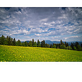 Forest, Clouds, Dandelion Meadow