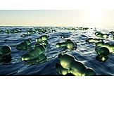 Meer, Plastikflasche, Wasserverschmutzung