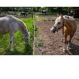 Horse, Paddock