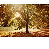 Park, Autumn, Tree