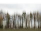 Defocused, Blurred Motion, Trees