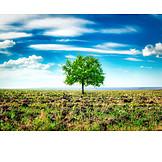Tree, Meadow, Plowed