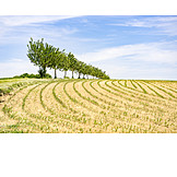 Field, Agriculture, Farming