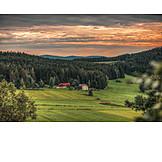 Meadow, Forest, Farm